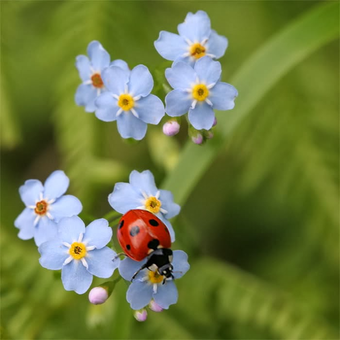 17 Beautiful Flower And Bug Photos
