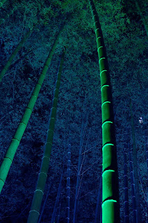 bamboo tree wallpaper