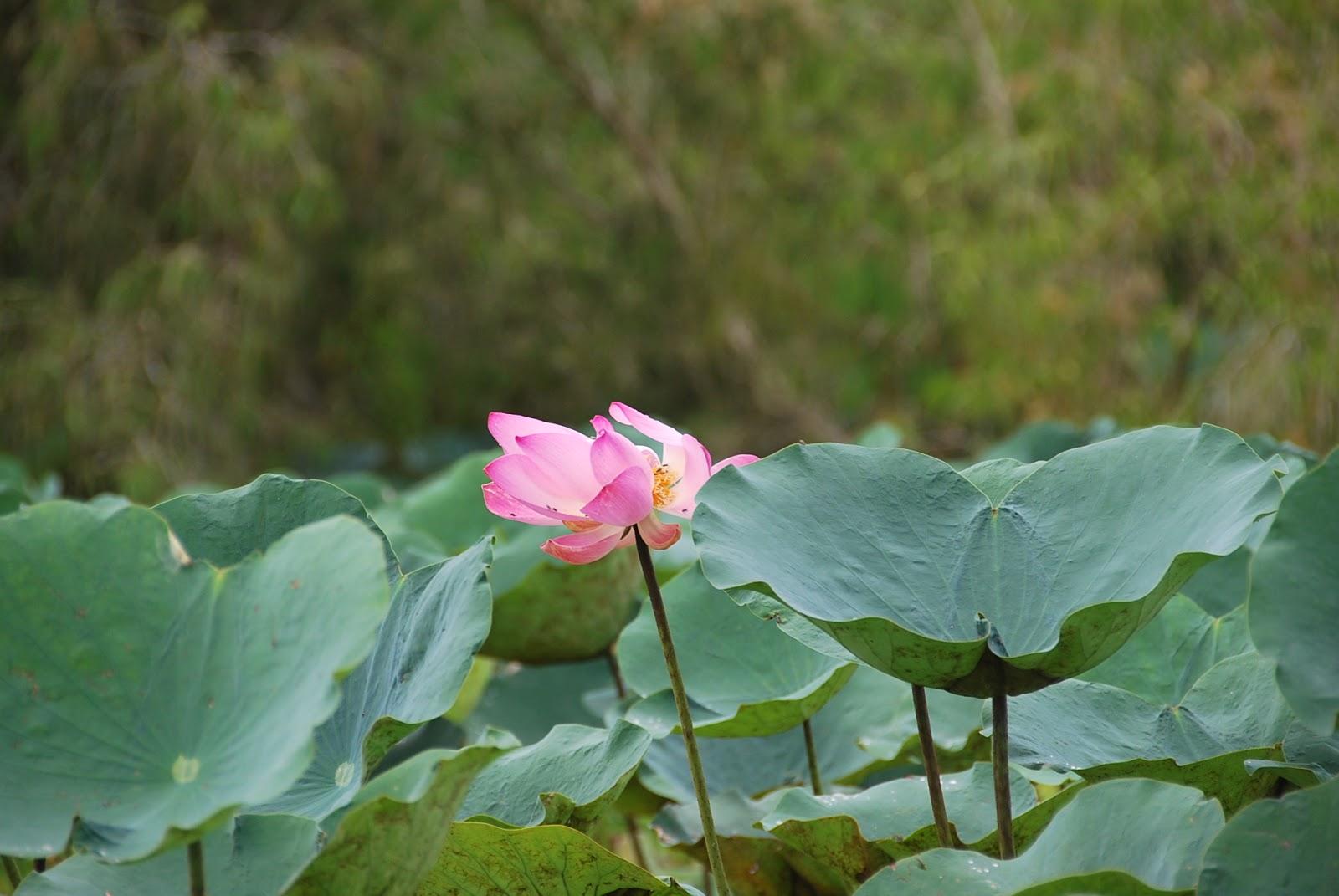 Du lịch Rừng Tràm Trà Sư mùa nước nổi