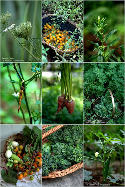 Healthy green living