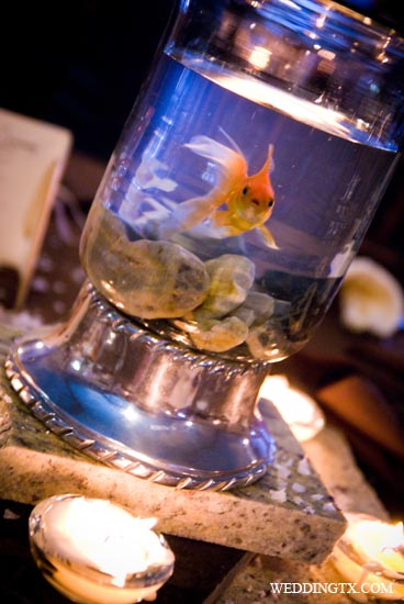 100 days to plan a wedding may 2011 for Beta fish centerpiece