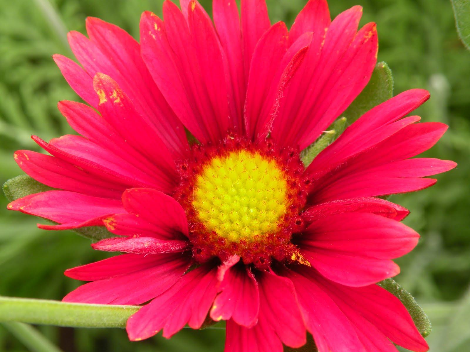 Mary s Louisiana Garden April Flowers