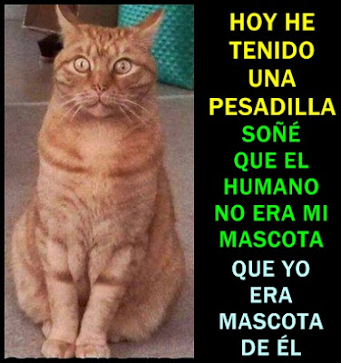 gato-mascota-pesadilla