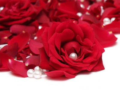 HD SHOOTZ: red rose | red rose wallpapers | rose | hd red rose