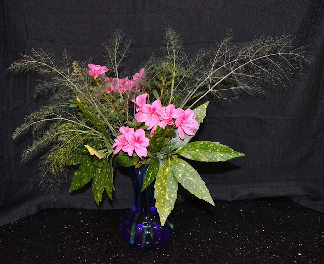 Encore azalea, fennel, Gold Dust aucuba, http://growingdays.blogspot.com