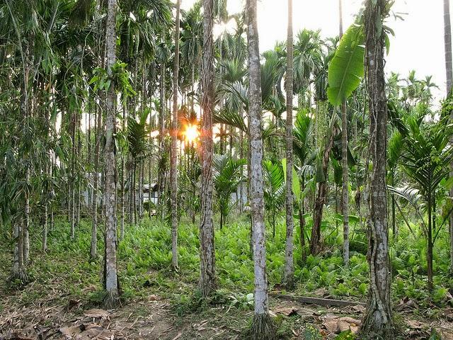 keibul mamjao national park