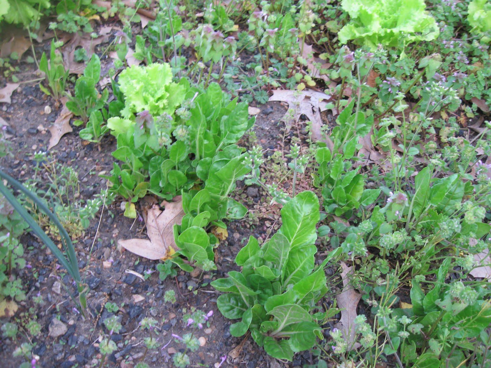 Kentucky Fried Garden Preparing The Vegetable Garden Soil For Tilling