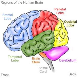 pelatihan otak tengah Banjarmasin