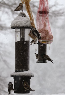 birds flocking to the feeder