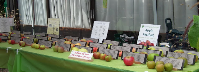 Apple varieties display at 2011 Master Gardeners Harvest Festival