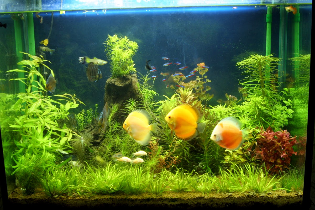 plantedtank027fz2.jpg