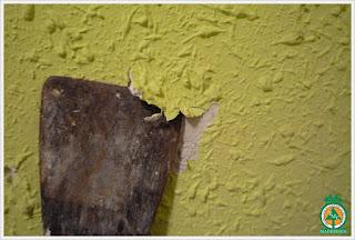 estuco-reparacion-maderas-de-cuale-puerto-vallarta