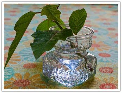 Minivas med blomskott