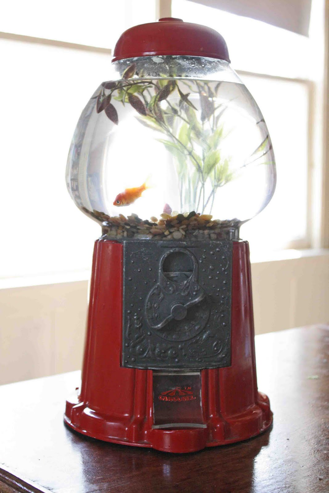 Superwoman turn a gumball machine into a fishbowl for Gumball machine fish tank