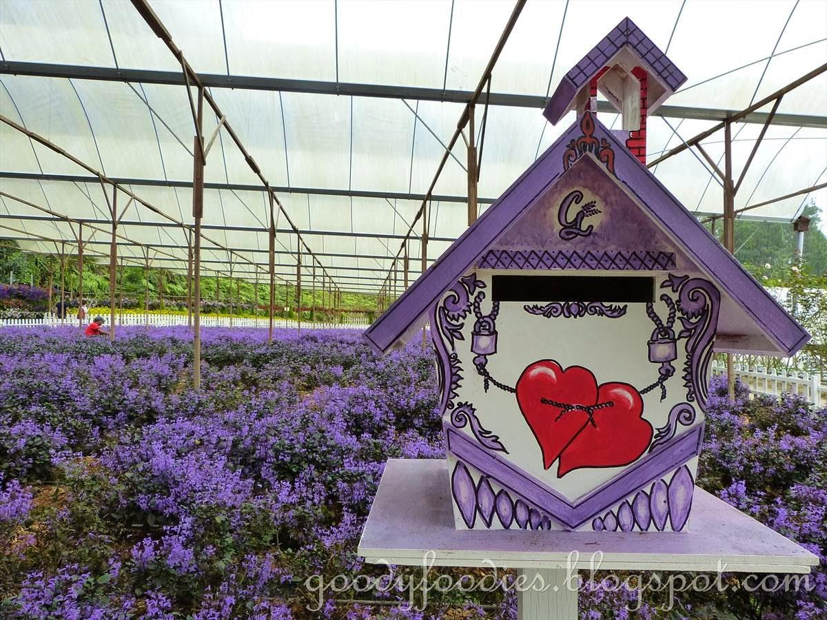 GoodyFoodies: Lavender Farm + Vegetable/Flower Farm + Mushroom Farm @  Gohtong Jaya, Genting Highlands