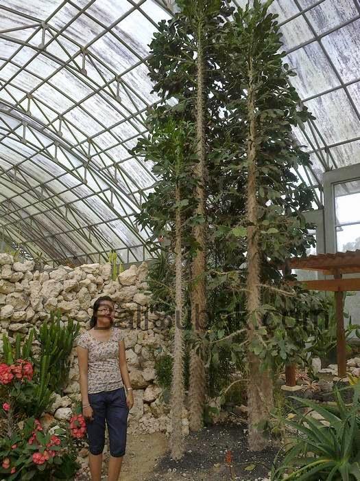 Cactus garden in the forest with the cold weather in Bedugul Botanical Gardens (Kebun Raya Eka Karya Bedugul)