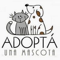 Adopta, no compres.