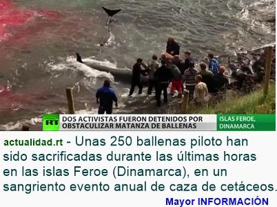 MUNDO: Horrorosa matanza de ballenas con ayuda de Armada danesa (Video, fotos)