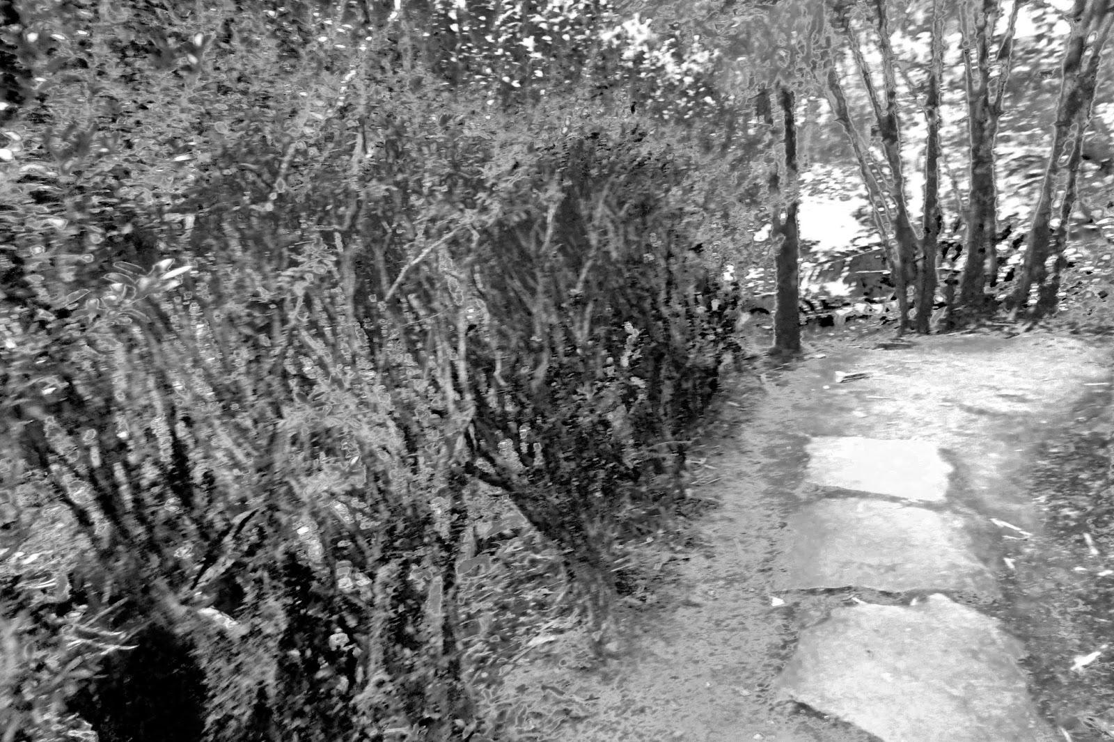 creepy walkway