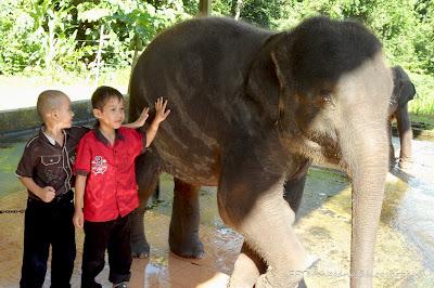 Seri si anak gajah
