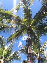 Oahu Maid Blog