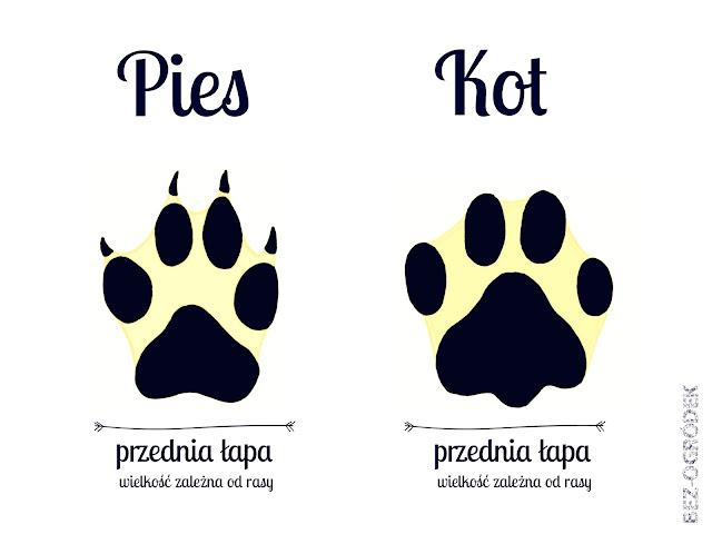 tropy psa i kota