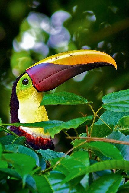 Projet : au Costa Rica
