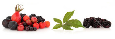 Permalink to Berry fruit that has many benefits