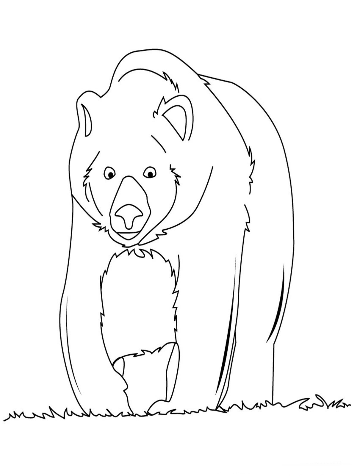 Bear coloring pages realistic realistic coloring pages for Free bear coloring pages