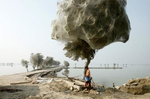 Millones de arañas se subieron a los árboles