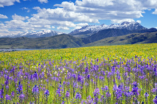 Ogden Valley Business Association: Wildflower and Landscape Photography Workshop offe...