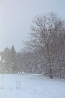 photo of snow covered field and trees