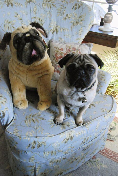http://2.bp.blogspot.com/-Jdip6ZKtFt8/T5DcwO7DEXI/AAAAAAACu9Q/lMnRWJ2-rrQ/s1600/animals-with-stuffed-toys-1.jpg