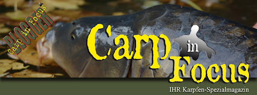 Carp in Focus