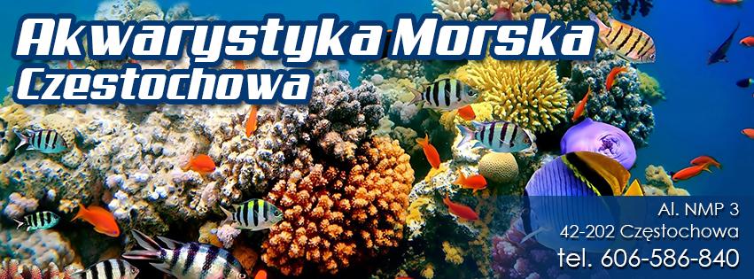 www.koralowce.com.pl