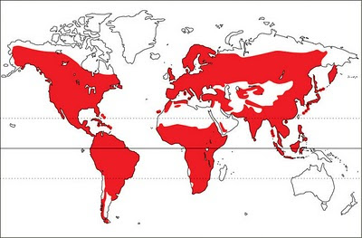 world distribution map of woodpeckers