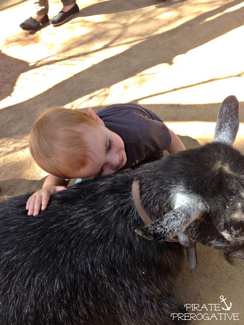 That goat is totes ready to cuddle