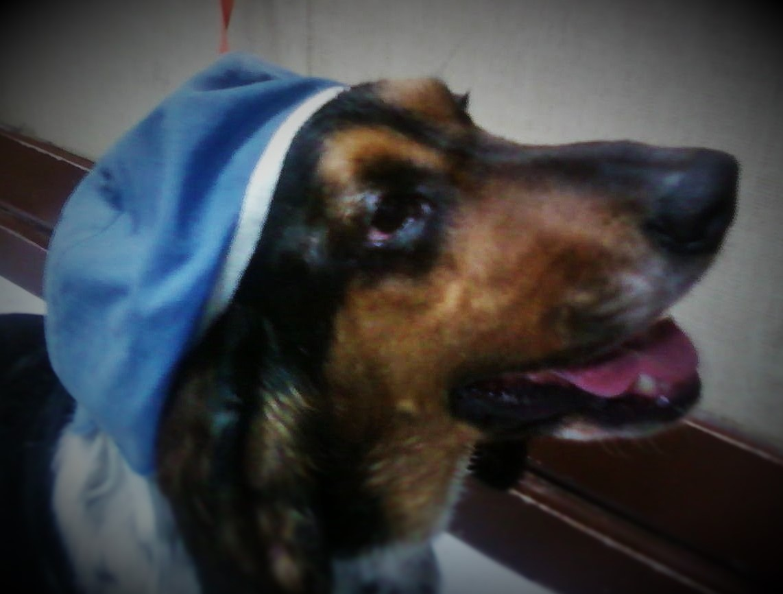 Quivira Road Animal Clinic * WEBSITE