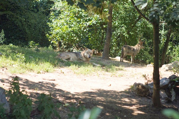 Style Jaunt - A Fashionable Travel Blog: Photo Tour: Zagreb's Maksimir Zoo