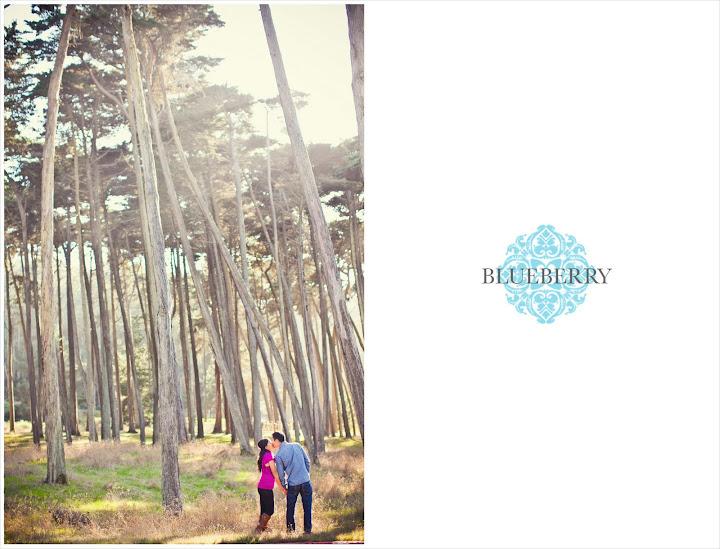 san francisco presidio eucalyptus tree forrest engagement session photography