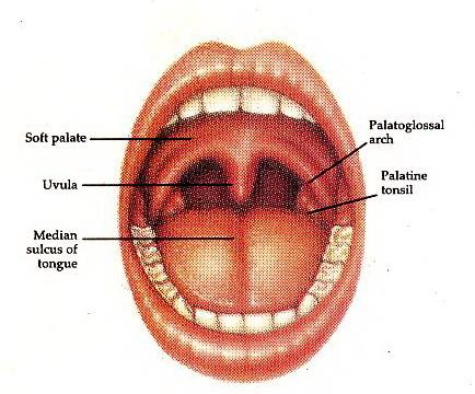 Prosedur Cara Tindakan Merawat Gigi dan Mulut