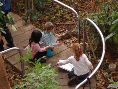 Ecoblog exploracion y conocimiento del mundo for Como crecen los arboles para ninos