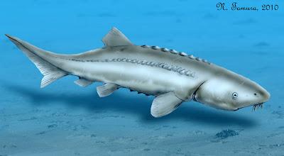 peces del jurasico Gyrosteus