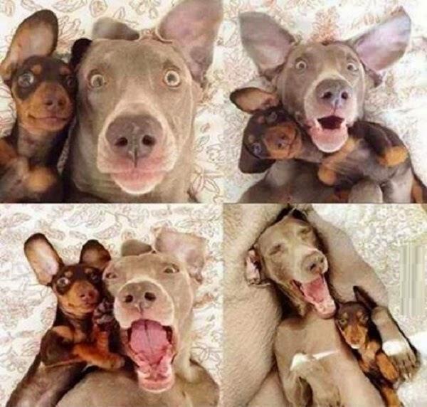 Selfie de Perros