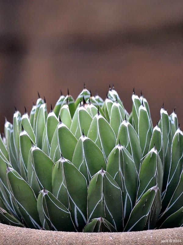 spiky leaves
