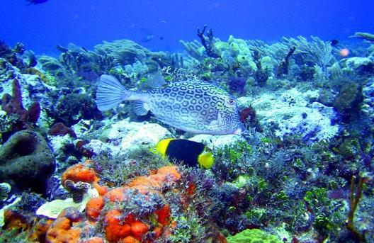 Ecosystem Animals And Plants