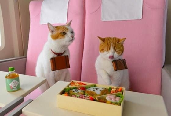 foto kucing lucu bernama Nyalan dan Deshi 01