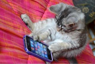 kitten on iphone