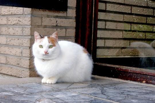 Lido cat