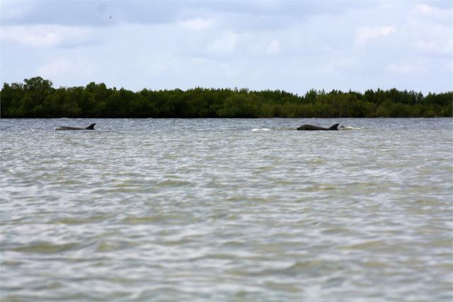Delfines a babor